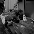 街猫1034