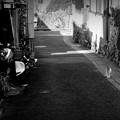 街猫1035