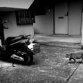 写真: 街猫1037