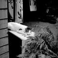 街猫1048