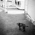 街猫1053