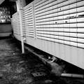 街猫1055