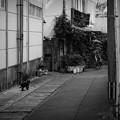 街猫1071