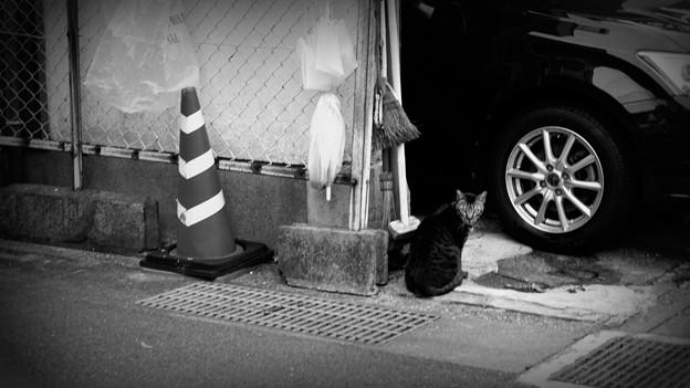 街猫1078
