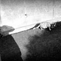 街猫1088