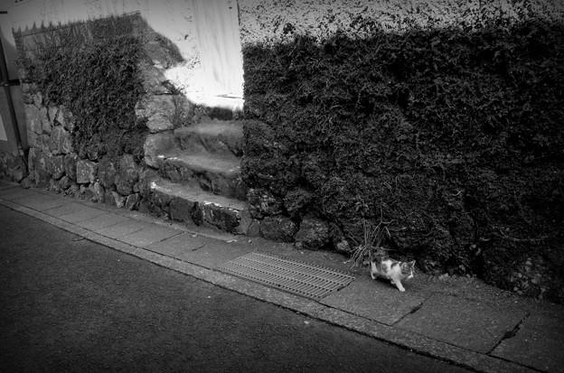 街猫1110