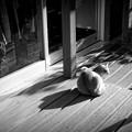 Photos: 街猫1116