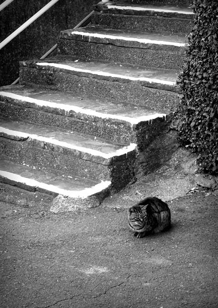 街猫1125