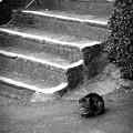 Photos: 街猫1125