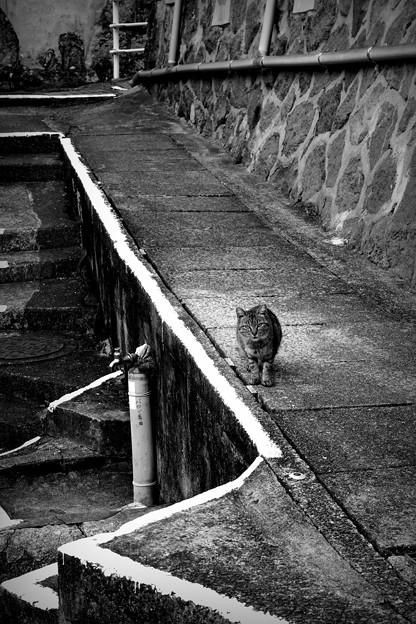 街猫1128