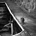Photos: 街猫1128