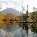 写真: 湧水池と羊蹄山
