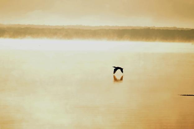 Photos: ウトナイ湖の夜明け