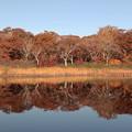 Photos: 紅葉の鏡沼