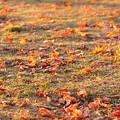 写真: 晩秋朝の公園