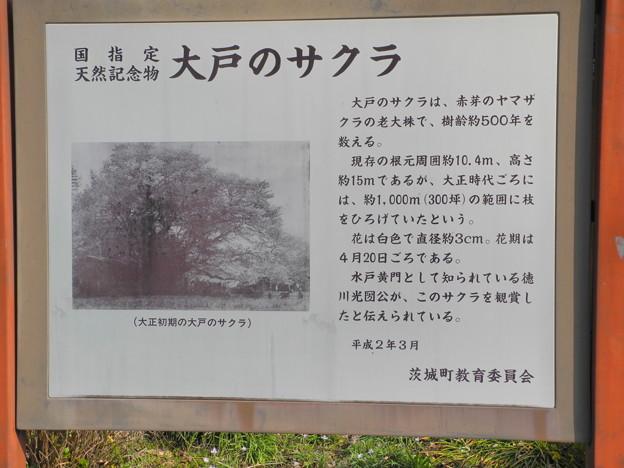 2018.04.01 大戸のサクラ