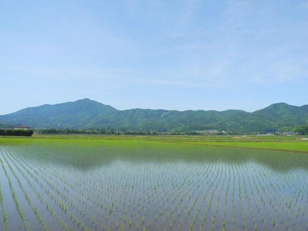 2018.05.11 きょうの風景(たんぼ、新緑、雲)