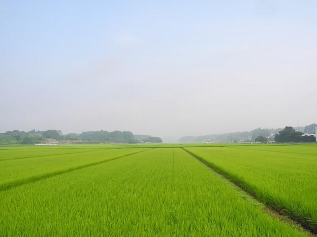 2018.07.17 きょうの風景(稲と雲・霧)