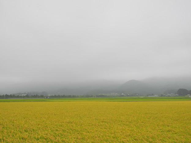 2018.08.30 きょうの風景・霧