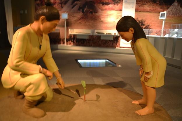 縄文人の生活