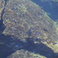 Photos: お魚さんが泳いでる