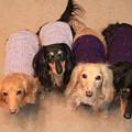 写真: ママの手編みニット着てみたよ