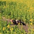 Photos: 菜の花畑でパチリ(渥美半島菜の花まつり/伊良湖菜の花ガーデン2018年2月10日)