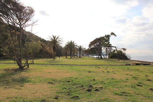 お宿の前の芝生公園