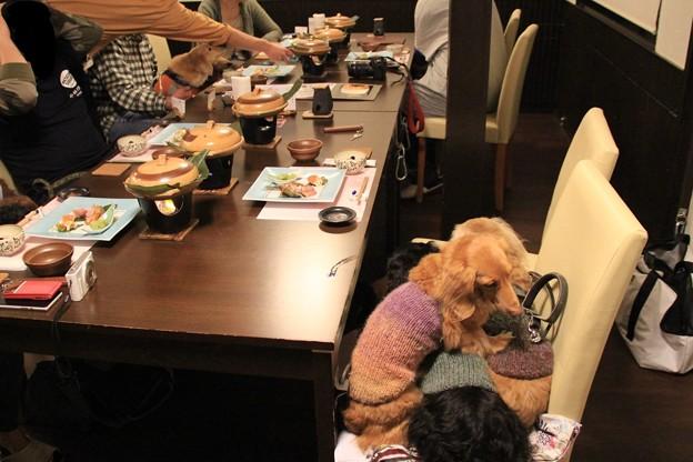 写真: お夕食の時間