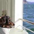 写真: 海を見つめるミント
