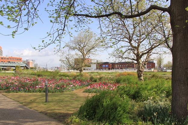 新港中央広場_ジャクリーンガーデンにて(2018年4月7日)