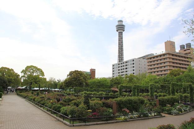 山下公園(2018年4月7日)