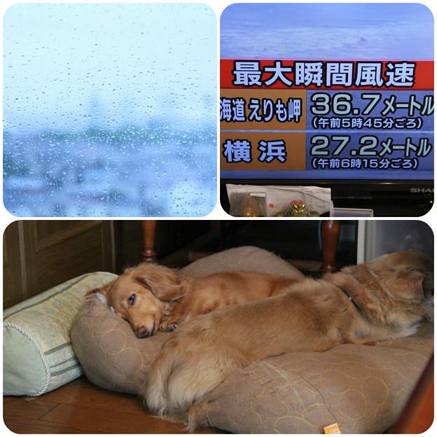 天気悪すぎ