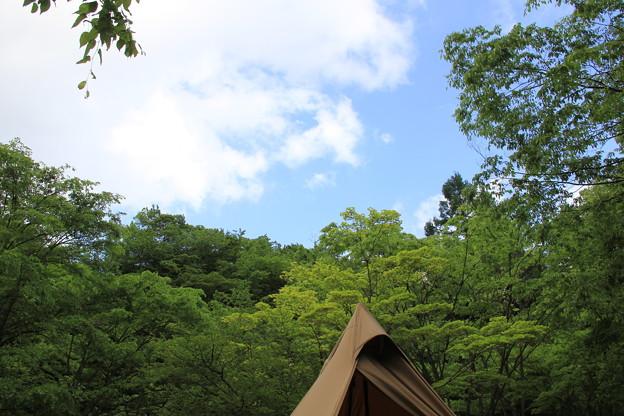 青い空と新緑