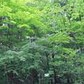 緑がきれい