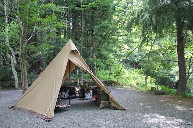 1人4ワンでキャンプ