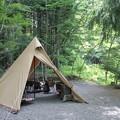 写真: 1人4ワンでキャンプ