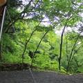 雨に濡れた新緑もきれい