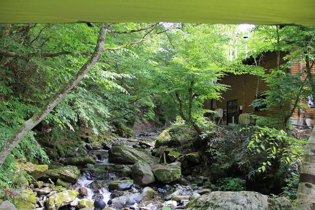 タープから見える緑と道志川