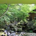 写真: タープから見える緑と道志川