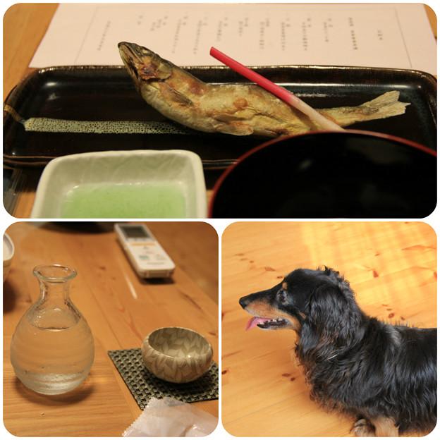 焼き物_日本酒おかわり