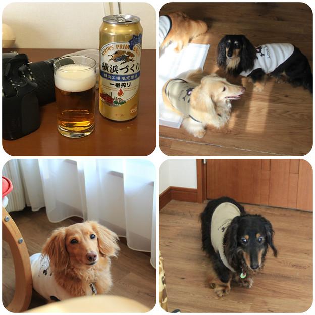 Photos: とりあえずビール
