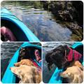 Photos: 水の中に何かいるかな