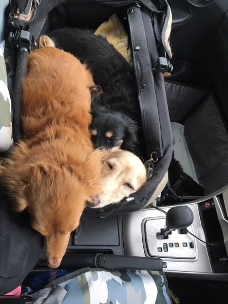 ドライブ中は寝んね