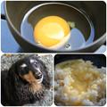 写真: 白州郷の平飼いたまごで卵かけご飯