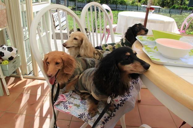Dog Run Cafe フルールさんでランチ