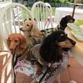 写真: Dog Run Cafe フルールさんでランチ