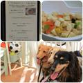 Photos: 鶏と豆腐のハンバーグ