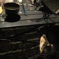 写真: お鍋の見張り?