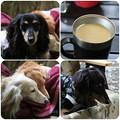 Photos: 朝のコーヒー